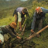 Andean Farmers Orlove.jpg