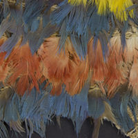 Feathers Under Visible Light.jpg